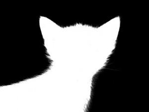 Langkah Mudah Teknik Masking Pada CorelDraw Dan Photoshop